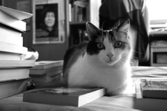 cat and poetry (*maya*) Tags: cat book chat poetry libro books literature libri poesia gatto katz leggere gatta letteratura toread