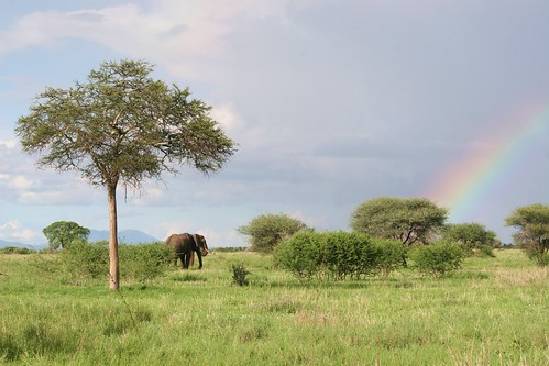 Elephant at the end of the rainbow