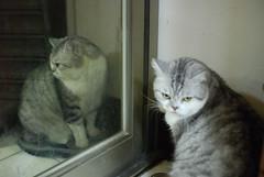 another me... (David CHOU) Tags: cat nikon jane f14 sigma 30mm d80 珍珍 choutali
