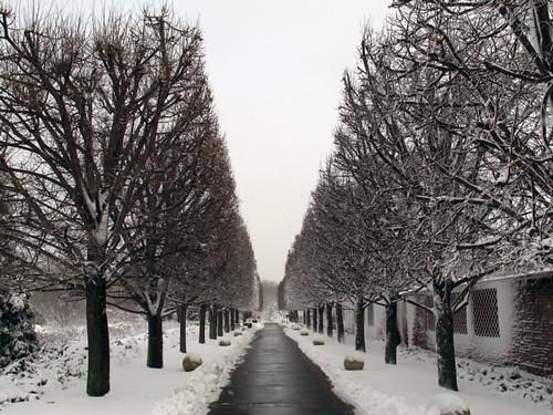 Tree path, winter