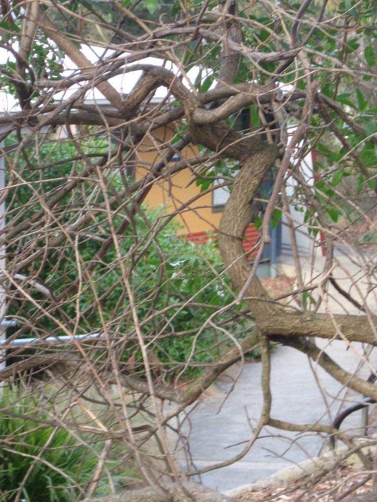 Bunkhouse through branches