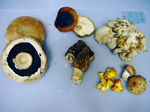 6 Types of mushrooms