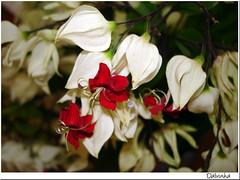 Friendship (Maria Dalva) Tags: flowers friends red flores amigos flower amigo friend friendship flor vermelho amizade