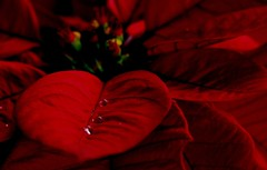 Merry Christmas (bdec) Tags: interestingness bravo brian interestingness205 interestingness227 challengeyouwinner briandecarmo anawesomeshot decarmo bratanesque wishingyouabeautifulweekenddearbrian