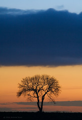 Little Sad Tree (. Andrew Dunn .) Tags: uk longexposure blue winter sunset england orange cloud tree silhouette landscape sadness britain norfolk lonetree eastanglia winterton westsomerton interestingness24 i500 cy2 challengeyouwinner superaplus aplusphoto