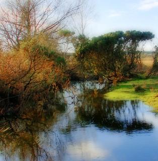 Curving stream in Holmsley Walk