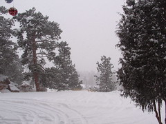 blizzard warning (Princess Valium) Tags: snow blizzard pinetrees viewfrommyporch holidayblizzard2006