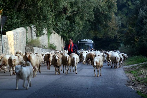 Sea of Goats approaching