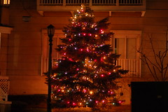Apartment Christmas tree (lowlight168) Tags: nyc slr digital d50 50mm nikon lowlight168