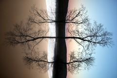 soul of a new sunset (zachstern) Tags: trees sunset wallpaper usa mountains tree canon landscape ir arbol tr maryland boom rbol infrared   albero tre puu arbre rvore strom baum trd  infravermelho    copac infrarot  ircamera  drzewo   stablo infrarrojos   infrapuna infrarood infrarouge  infrarossi  abigfave  s30ir  inframerah      infravrs  infraerven