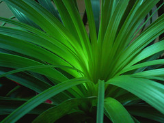 Green Light and Glow, Hospital Plant - by cobalt123