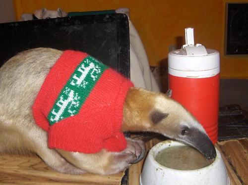 osos hormigueros con sweaters