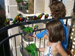 Kids feeding LOTS of Lorikeets