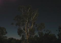 full moon, mozzie bites (michenv) Tags: longexposure sky bulb night australia fullmoon albury eucalyptustree   mosquitobites starrysky