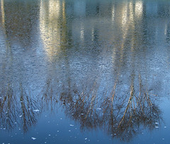 Water And Ice Reflection (shesnuckinfuts) Tags: blue trees winter distortion cold reflection ice water outdoors pond backyard washingtonstate kentwa december2006 abigfave shesnuckinfuts impressedbeauty
