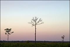 dusk trio - by anjan58