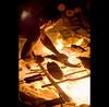 caboclo dreams (© Tatiana Cardeal) Tags: travel brazil brasil digital documentary tatianacardeal pará brésil amazonia amazonie amazônia documentaire piracaia caboclo flona documentario ribeirinho 亚马逊 jamaraquá florestanacionaldotapajós tapajósnationalforest projetosaúdeealegria healthandhappinessproject saudeealegria 아마존 亞馬遜 амазония αμαζονία アマゾニア أمازونيا