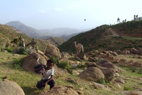 Debre Bizen - boy, bird, camel