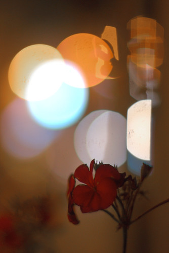Wind Flower Light