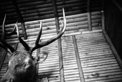(page thirteen) Tags: cabin hunting surreal eerie haunted mysterious elk presence paranormal minox omen premonition minox35 minox35el