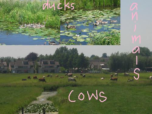 4 - animals