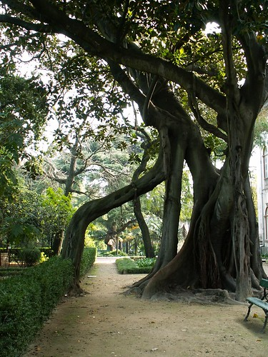 Lisboa - tree