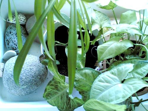 Viherkasvit by Anna Amnell