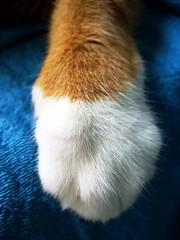 Sofia (Bia P) Tags: pets cute animals cat paw feline gato purr impressedbeauty