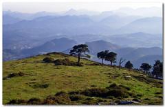 671 (sul gm) Tags: espaa naturaleza mountain mountains fotosencadenadas landscape spain asturias paisaje pinos montaa montaas asturies paraisonatural salgm subidaalpienzu