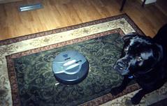 roomba001 (ya3hs3) Tags: pet housework round sixstreet