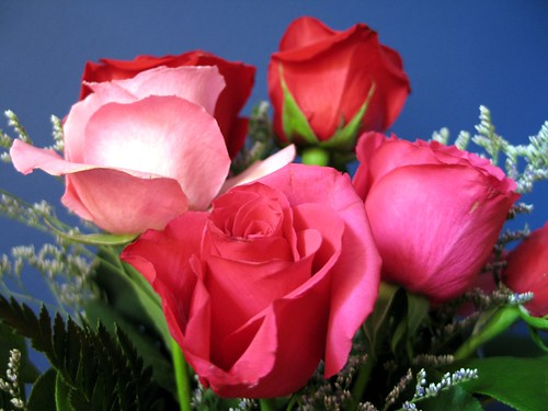 Valentine Flowers for the best prices, instock now. Purchase Today.