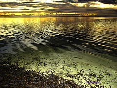 Seaweed of the sea (Ibrahim Firaq) Tags: sunset seaweed beach bravo waves indianocean ibrahim maldives reflaction addu oustanding hithadhoo outstandingshots firaq abigfave adduatoll anawesomeshot colorphotoaward wowiekazowie ishflickr