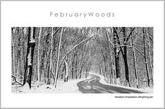 February Woods (Mingfong) Tags: blackandwhite bw white snow monochrome wisconsin woods calendar snowy story madison albumcover february stories         mingfong  ayearinmadison  musicflyer  mingfongjan   artbrochure  sketchoflight mingfongphotography
