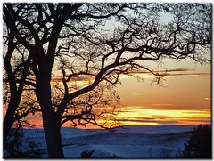 December Sunset on the Palouse (9) (Roger Lynn) Tags: winter sunset tree december moscow branches idaho palouse cotcbestof2006 mybestimagefordecember2006