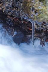 Icicle by the stream (andyp uk) Tags: winter snow cold ice water rock geotagged stream december poland polska 2006 plazes icicle wisła wisla malinka geolong18877108711351 geolat49632662153738 plazed379a1cb2b9dacbda02adfdda35cd8a7