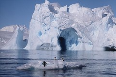 Adelie Raft (peterkelly) Tags: snow film ice berg landscape penguin penguins antarctica iceberg adelie frostbites bestnaturetnc07