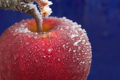 Frosty Apple (Explore) (Dusty V) Tags: uk blue red cold tree ice apple nikon frost crystals d70s freeze nikkor appletree malus somersham 105mmvrmicronikkor