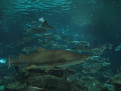 Sharks at the Barcelona Aquarium
