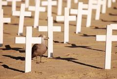 Soldier Memorial - Santa Monica (whisperbee) Tags: california sunset santamonica seagull rip crosses fallen santamonicabeach nikonian soldiermemorial d80 sunsetcalifornia