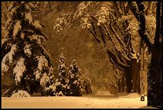 silent night (♫ marc_l'esperance) Tags: silentnight whitechristmas fresh clean snowfall quiet night christmassnow whitexmas neighbourhood street 1am trees snowy branches shadow light streetlight snow covered sidewalk winter crunchy powder christmas vancouver xmas uncropped nocrop minimalpostproduction longexposure tripod unalteredcolour notsepia 2006 ef70200mmf28l cml bravo abigfave canon eos 10d thegallery canonef70200mmf28lusm canon70200f28l gvrd © allrightsreserved narnia frozen cold crisp calm placid peaceful meditative luxmaticcom