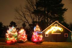 Christmas trees (MooseDog Studio) Tags: christmas trees night stars lights christmaslights evergreen