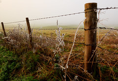 Desolation (Flying Fin) Tags: england yellow fog fence d50 nikon frost december wideangle berkshire barbwire caversham 227explore271206