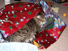 Bonnie Gift Wrapped 1