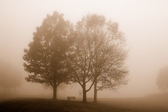 Trees, Fog and Bench (Wayne's World 7) Tags: trees fog wonderful bench niceshot atmosphere loveit fav beautifully marshcreek instantfav greatatmosphere excellentcapture