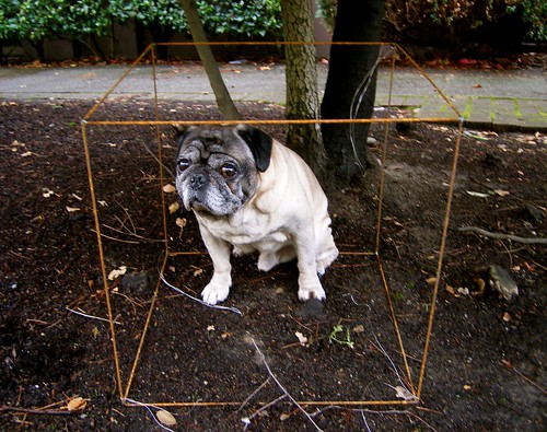 Pug in WIre Cube