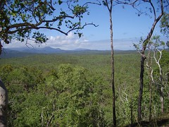 daintree selva australia
