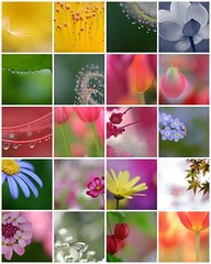 Top 20 favourites for 2006 as chosen by the Flickr world - by rosemary*