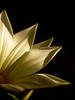 (joaquinportela) Tags: lighting light españa naturaleza flower macro art nature fleur lumix spain topc50 flor naturallight blumen panasonic fiori cartagena 100club closer fz30 iloveit raynox 111v1f raynoxdcr250 1on1flowers 1on1nature 1on1macros macroism laazohia abigfave superaplus pdpnw