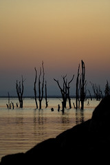 At the peep of the day (Sbrimbillina) Tags: africa wild lake nature water colors lights silent alba zimbabwe kariba lakekariba petrifiedforest silenzio albeggiare atthepeepoftheday acquechete acorneroftheearth wordsofsilence
