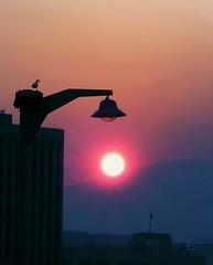 Bushfire Sunset (steph.A) Tags: sunset summer sky sun night streetlamp seagull smoke tasmania hobart bushfire nikonstunninggallery twtmesh030815